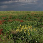 BHP to hold Seed Bank 'think tank'