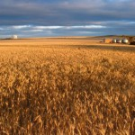 Grain growers cut down mining review and push for submissions extension