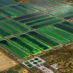 Sustainable oil from algae: the technology is ready, but what about the politics?