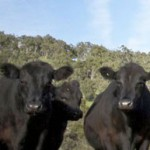 Andrew Forrest beefs up iron ore business with abattoir acquisition