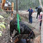 Horse rescued from abandoned mineshaft