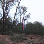 Whitehaven Coal agree to stop winter clearing in Leard State Forest but say Maules Creek mine still on schedule
