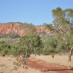 Xstrata dumps QLD copper project