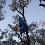 Another day, another person in a tree at Maules Creek mine