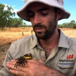 BHP uncovers new spiders in Bush Blitz