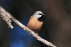 Adani moves closer to construction with black-throated finch approval