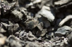 Bounty production hit by Cook Colliery roof fall